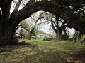 Mary Plantation Guest House From Barn no zoom.JPG