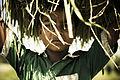Meet The Green Boy (7988280555).jpg