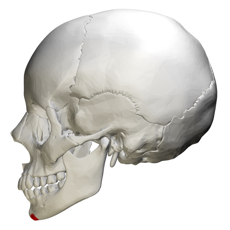 File:Mental tubercle - skull - lateral view.png ...