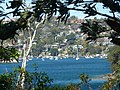Middle Harbour - Sydney 1 (10 kms from CBD) - panoramio.jpg