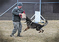 Military working dogs train for mission success 120215-F-EA289-007.jpg