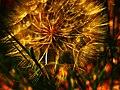 Mini splendor (14320128005).jpg