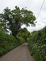 Minor road, to Dawlish - geograph.org.uk - 1291020.jpg
