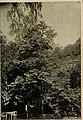 Mitteilungen der Deutschen Dendrologischen Gesellschaft (1918) (14589690219).jpg
