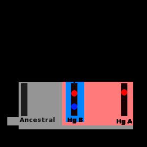 Haplogroup