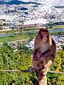 MonkeyOverKyotoAtArashayama.jpg