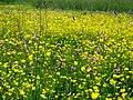 Moorwiese im Kupferbachtal.jpg