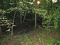 Morgan Arboretum 04.jpg
