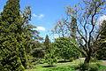 Morris Arboretum - DSC00451.JPG
