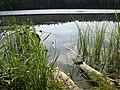 Morskie Oko - panoramio (3).jpg