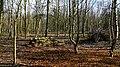 Morton Colliery Plantation - geograph.org.uk - 373634.jpg