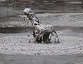 Mud 9 (31136503103).jpg