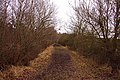 Muddy track to York's Wood - geograph.org.uk - 1730165.jpg