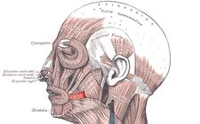 musculus risorius