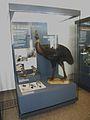 MuseumfürNaturkundeSpecimenPreparationTaxidermyBirds.jpg
