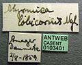 Myrmica lobicornis casent0103401 label 1.jpg