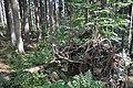 NPR Boubínský prales 20120910 17.jpg