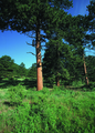 NRCSCO01028 - Colorado (1443)(NRCS Photo Gallery).tif