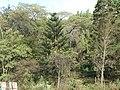 Nairobi Arboretum Park 35.JPG
