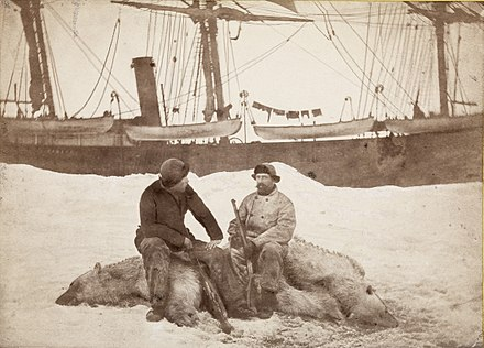 Fridtjof Nansen (left) and Captain Axel Krefting, sitting on just shot polar bear with the Viking in the background (One of the pictures from a journey with sealers to Vestisen during the period March to July 1882). Nansen Krefting 2.jpg