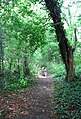 Narrow path through woodland - geograph.org.uk - 1384177.jpg