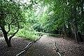 Nashdom Abbey - Woodland path - geograph.org.uk - 899992.jpg