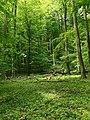 Nationalpark Hainich craulaer Kreuz 2020-06-03 11.jpg