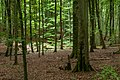 Naturbëschreservat «Beetebuerger Bësch»-101.jpg