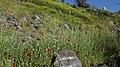 Nature In Hrazdan Gorge 06.jpg