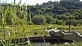 Nature In Hrazdan Gorge 33.jpg