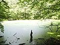 Nature reserve Meteoryt Morasko (2).jpg
