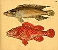 Naturgeschichte in Bildern mit erläuterndem Text (Taf. LVII) (6058666053).jpg