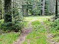 Naturschutzgebiet Hesel-, Brand- und Kohlmisse - panoramio (1).jpg