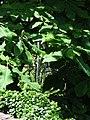 Naumkeag - Stockbridge MA (7710312304).jpg