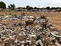 Niger, Dosso (64), Place Sofakolé.jpg