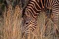 Nkomazi Game Reserve, South Africa (22652868375).jpg