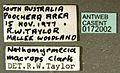 Nothomyrmecia macrops casent0172002 label 1.jpg