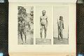 Nova Guinea - Vol 7 - Ethnographie - 1913 - Tafel 39.jpg