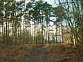 Nr Fittleworth Common - geograph.org.uk - 92806.jpg