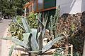 Nyíregyháza Zoo, succulents-6.jpg