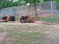OKC Zoo May 2007 - 75 (497244755).jpg