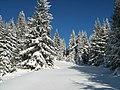O poieniţă iarna - panoramio.jpg