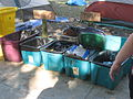 Occupy DC trash facilities.jpg