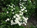 Okrasné květiny doma a na zahrádce 02.jpg