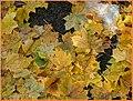 Oktober Laub - panoramio.jpg