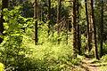 Old Sauk Trail (5970453848).jpg