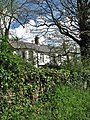 Old ivy-clad wall surrounding Bacton Hall - geograph.org.uk - 785718.jpg