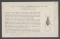 Onychopterygia - Print - Iconographia Zoologica - Special Collections University of Amsterdam - UBAINV0274 012 02 0095.tif