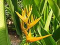 Orange - yellow flower.JPG