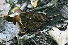 Animal Coloration Wikipedia